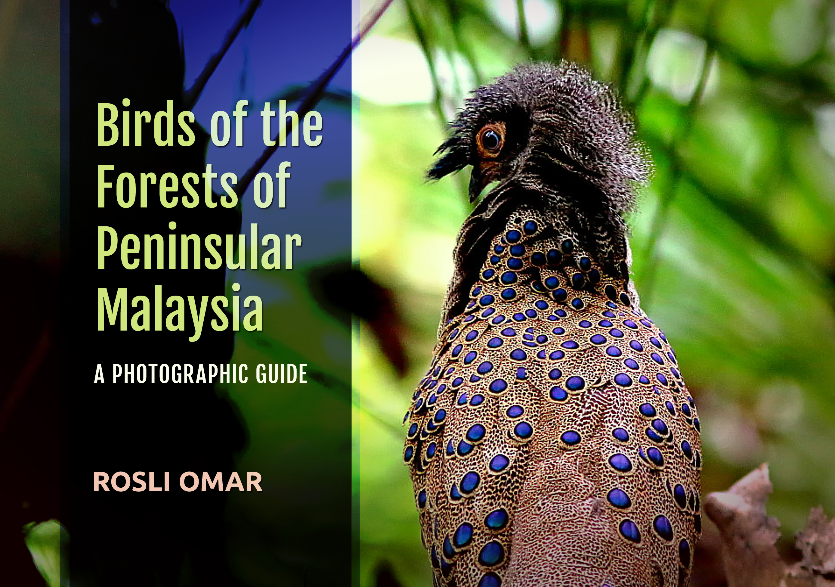 Birds of the Forests of Peninsular Malaysia: A Photographic Guide (Hardcover)
